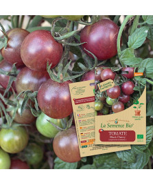 Graines de TOMATE Black cherry BIO
