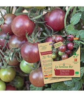 Graines de TOMATE Black cherry BIO