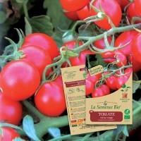 Graines de TOMATE Cerise rouge BIO