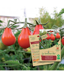 Graines de TOMATE Red pearshaped BIO