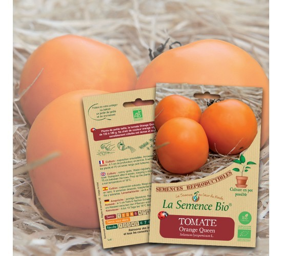 Graines de TOMATE Orange Queen BIO