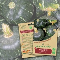 Graines COURGE Buttercup BIO