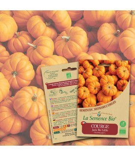 Graines COURGE Jack be little BIO