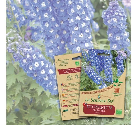 graines de DELPHINIUM Galilée blue BIO
