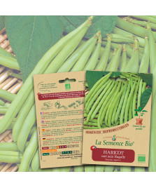 Graines de HARICOT vert nain Rugally BIO