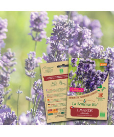 Graines LAVANDE Officinale BIO
