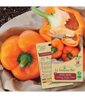 Graines de POIVRON california wonder orange