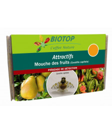 Attractif mouches des fruits