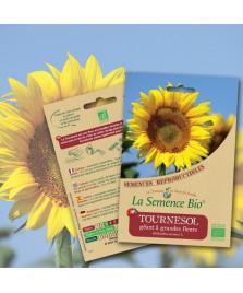 Graines de Tournesol géant à grandes fleurs BIO