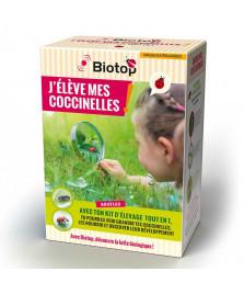 Kit d'élevage de coccinelles