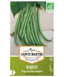 Graines de Haricot Pongo Sans fil Vert