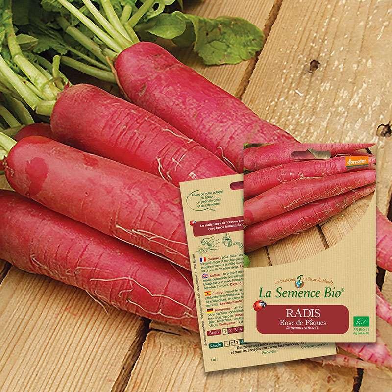 Graines de radis rose de p ques bio - Radis rose de chine ...