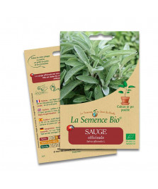 Graines de SAUGE Officinale BIO