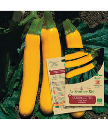 Graines de COURGETTE Gold rush BIO
