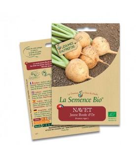 Graines de Navet Jaune Boule d'or BIO
