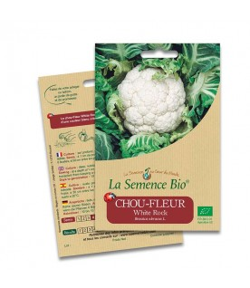 Graines de Chou-fleur White rock BIO