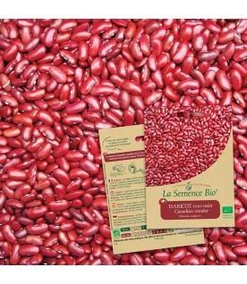 Graines de Haricot  coco nain Canadian wonder BIO
