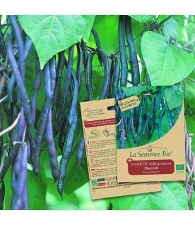Graines de Haricot  violet  grimpant Blauhilde BIO