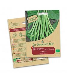 Graines de Haricot vert grimpant Emerite BIO