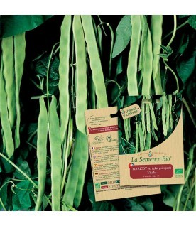 Graines de Haricot vert plat grimpant Vitalis BIO