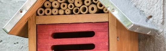 Hôtels à insectes, coccinelles, chrysopes, papillons