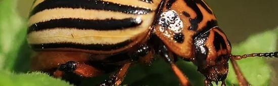 Insecticide biologique :phéromones carpocapse, nématodes et insecticides bio