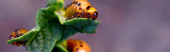 Insecticides utilisables en agriculture biologique