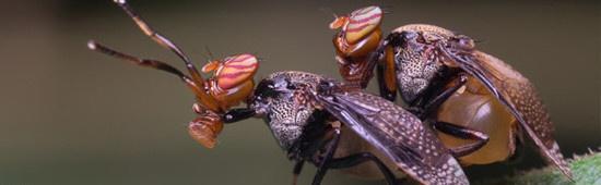Mouches et moustiques