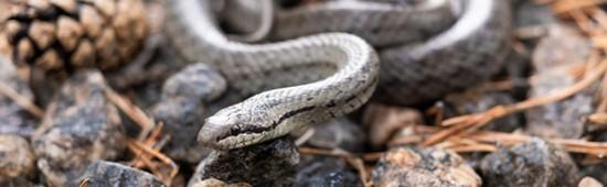 Comment éloigner les serpents - couleuvres, vipères, toutes espèces