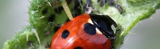 Lutte biologique contre les nuisibles et ravageurs - Mon Vert Jardin