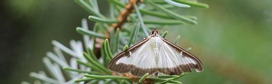 Les phéromones : une méthode écologique utilisée en agriculture biologique