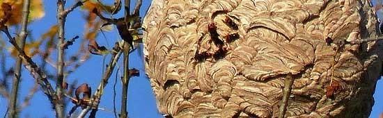 Pièges à insectes nuisibles