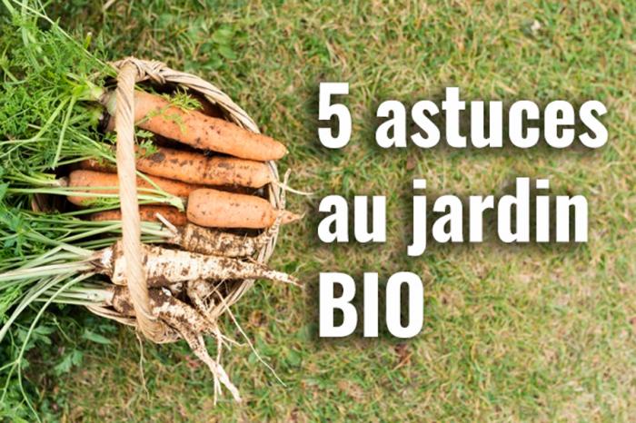 5 astuces en jardinage bio