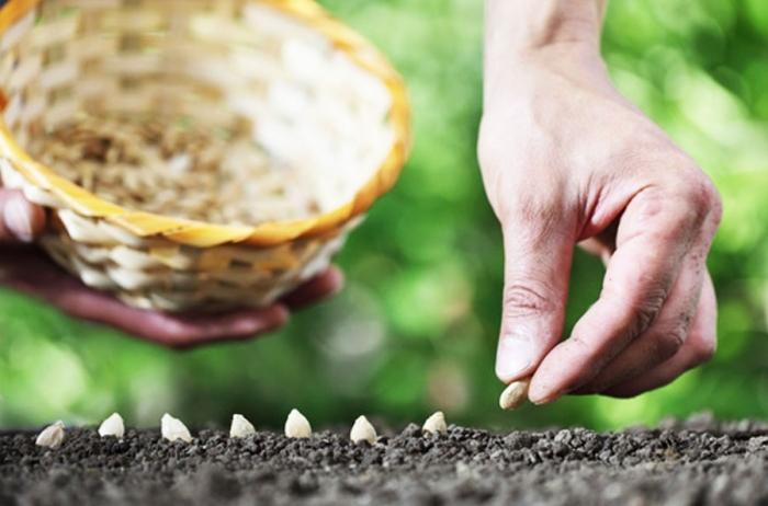 Les mini-serre de culture : jardinez facile et plus tôt !
