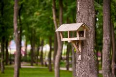 Mangeoires à oiseaux, fonctionnement, modèles et usages