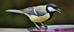 Pourquoi installer des bains d'oiseaux et des abreuvoirs dans mon jardin ?