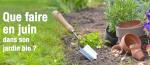 Que faire en juin dans son jardin bio  ?