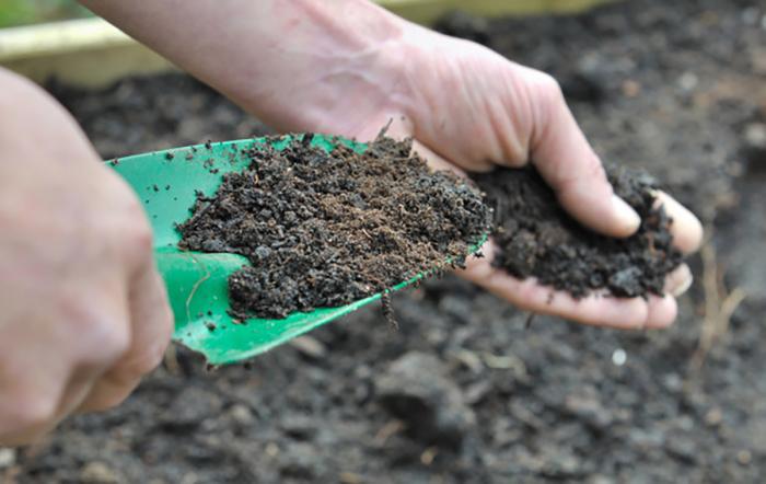 Quelle différence entre compost et terreau ?